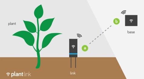 Plantes connectées avec le Flower Power de Parrot ou le Plant Sensor de Koubachi?