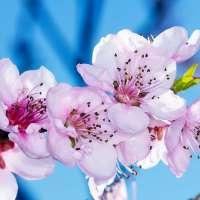 Цветение в апреле