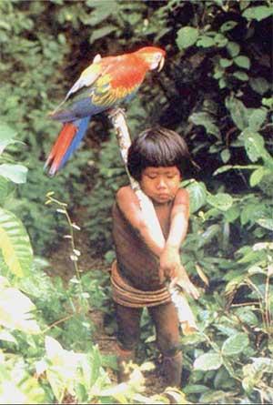 Estrada da Amazônia ameaça índios não contatados de extinção (foto site: www.mochileiro.tur.br/parquesro.htm)