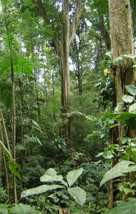 Brasil tem a maior área de florestas do mundo