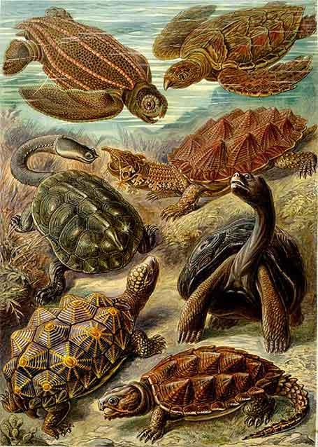 Ilustração, Ernst Haeckel, formas de arte da natureza