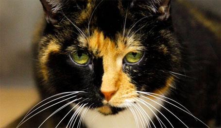 Foto de willow a gata desaparecida