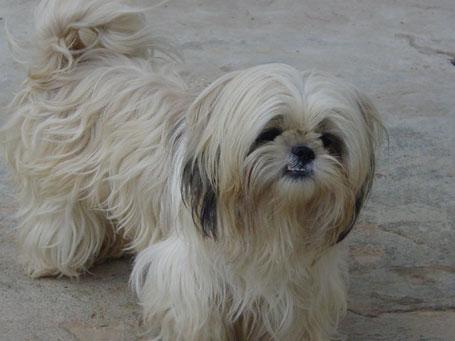 Foto da cadela Florzinha - os sete alimentos que você não deve dar ao seu cão