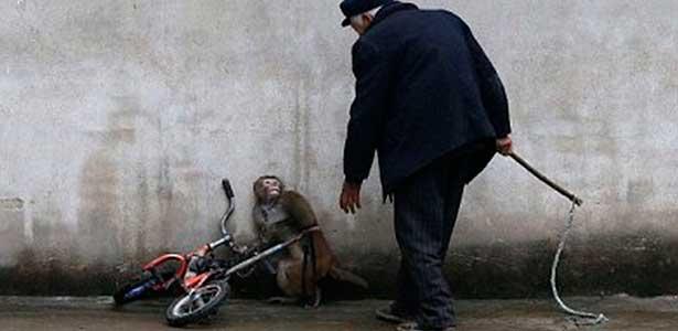 Maus tratos aos animais - imagem de macaco aterrorizado