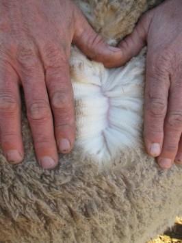 OBDM 150117 wool