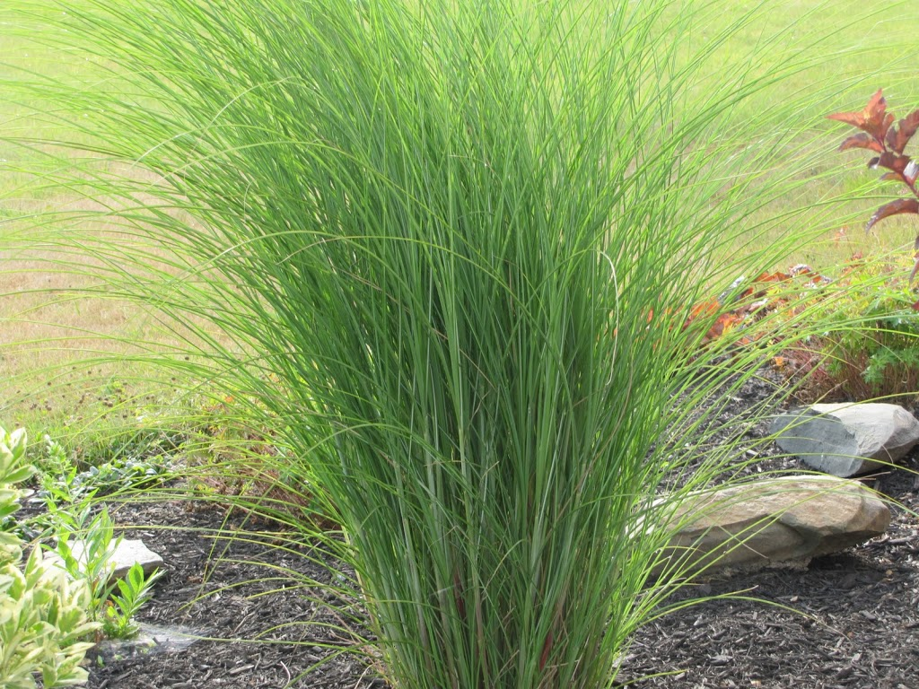 Ornamental grasses you had me at hello the obsessive for Grass bushes landscaping