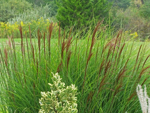 Yes more ornamental grass love the obsessive neurotic for Ornamental grasses for small spaces