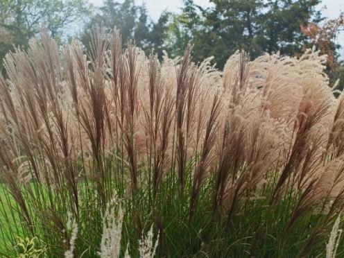 See ya ornamental grasses the obsessive neurotic gardener for Names of ornamental grasses