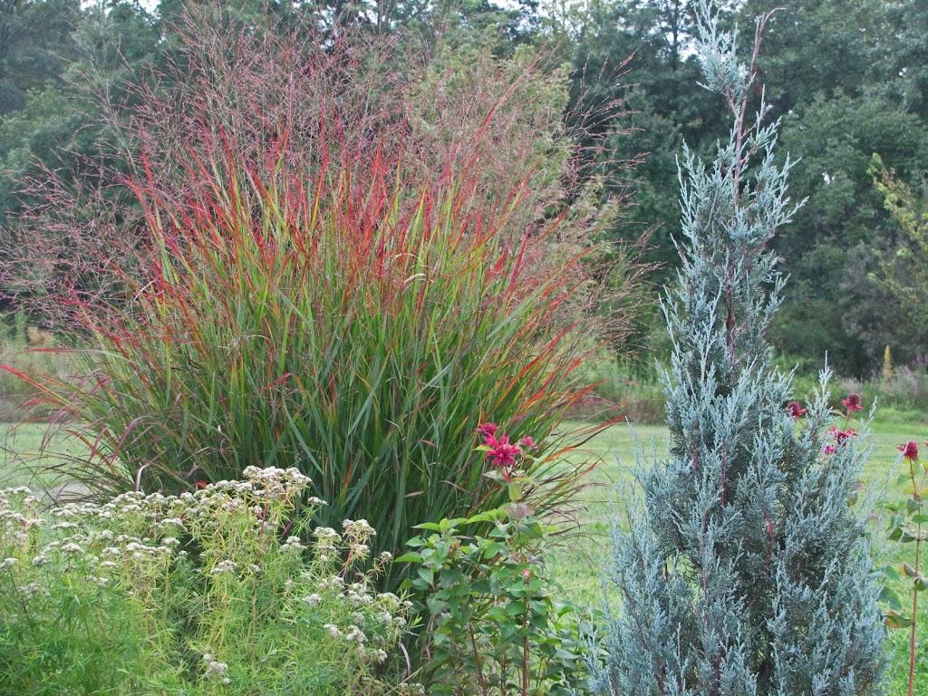 Ornamental grasses take the spotlight the obsessive for Perennial grasses