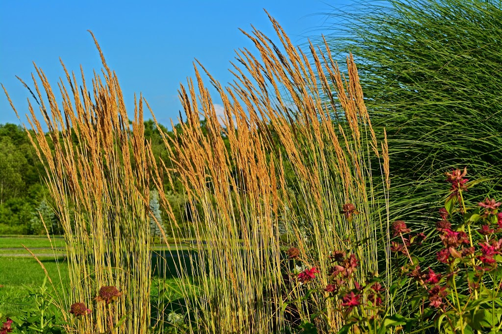 Some ornamental grass reviews the obsessive neurotic for Ornamental feather grass