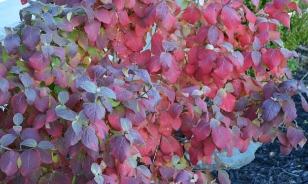 best fall foliage plants