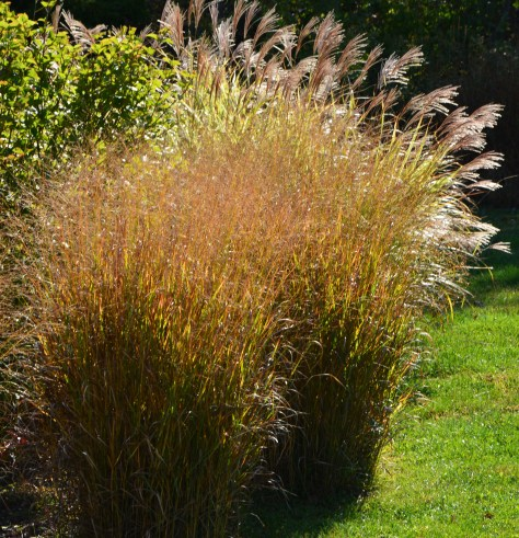 grasses fall color