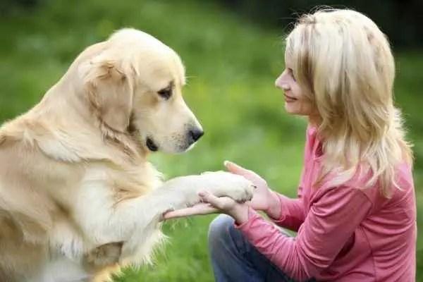 Cão carinho