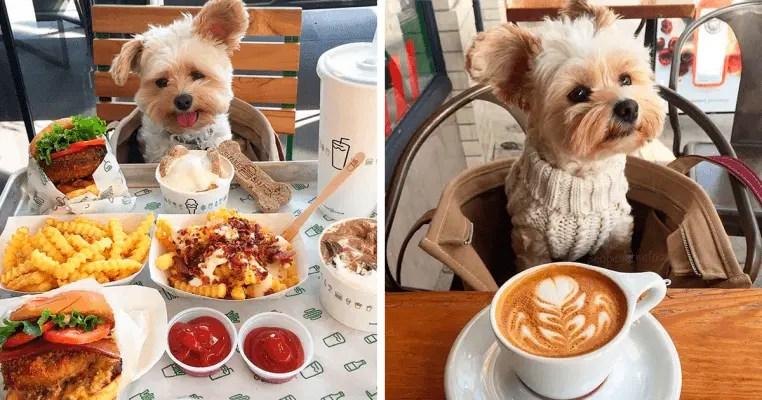 rescue dog restaurants food instagram popeyethefoodie fb2