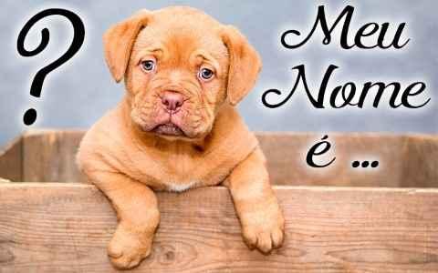 Nomes de Cachorro Macho