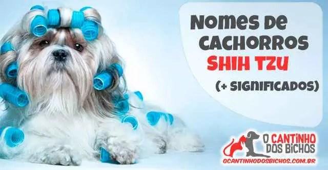 Nomes de Cachorro Shih Tzu
