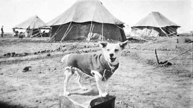 Horrie - O Cachorro Herói