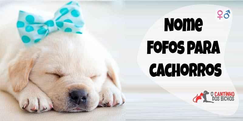 Nomes para cachorros fofos