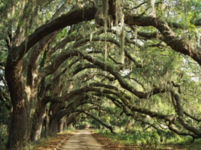 oaks-fitzhugh