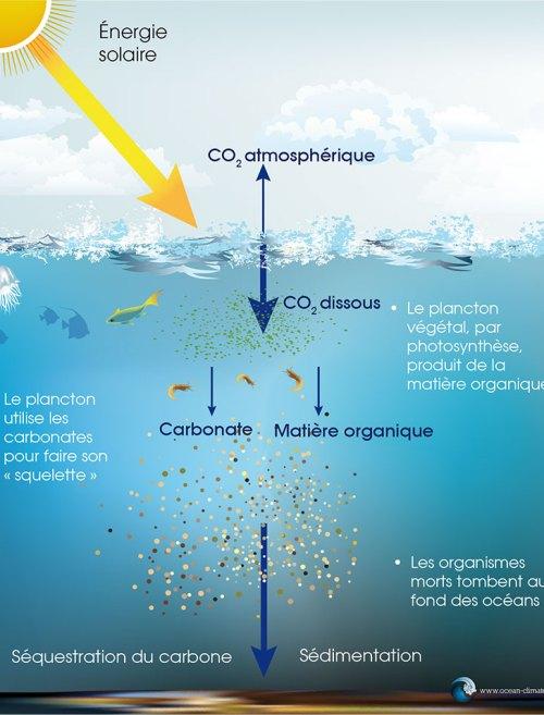Pompe à carbone biologique