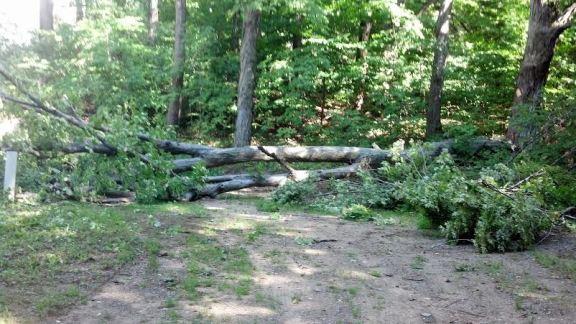 tree sewage spill 2