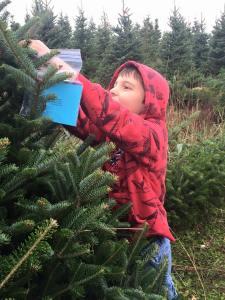 Spitler Christmas trees-5