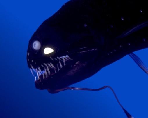Spooky Ocean Critters