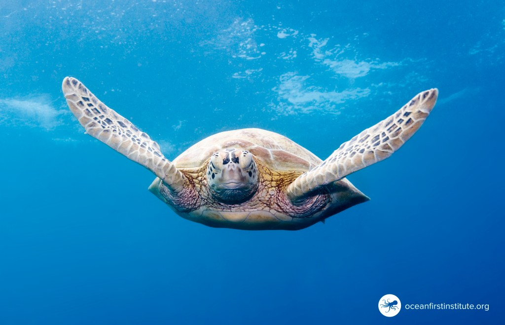 Celebrating World Oceans Day with Ocean First Institute