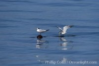 elegant tern 07509 - HEALTH AND FITNESS