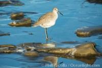 unidentified sea bird 30308