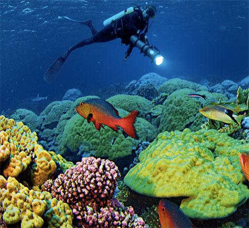 reefs-at-risk-01-af