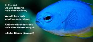 fish-slide