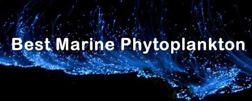 Ormus Minerals Ocean Nectar - Best Marine Phytoplankton