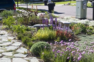 Drought Tolerant landscaping in orange county