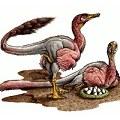 fosiles_bonapartenykus_ultimus120