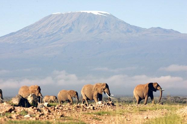 A herd of elephants walk in front of Mt. Kilimanjaro in Amboseli game park in Kenya in this May 21, 2006 file photo. (AP Photo/Karel Prinsloo, file)