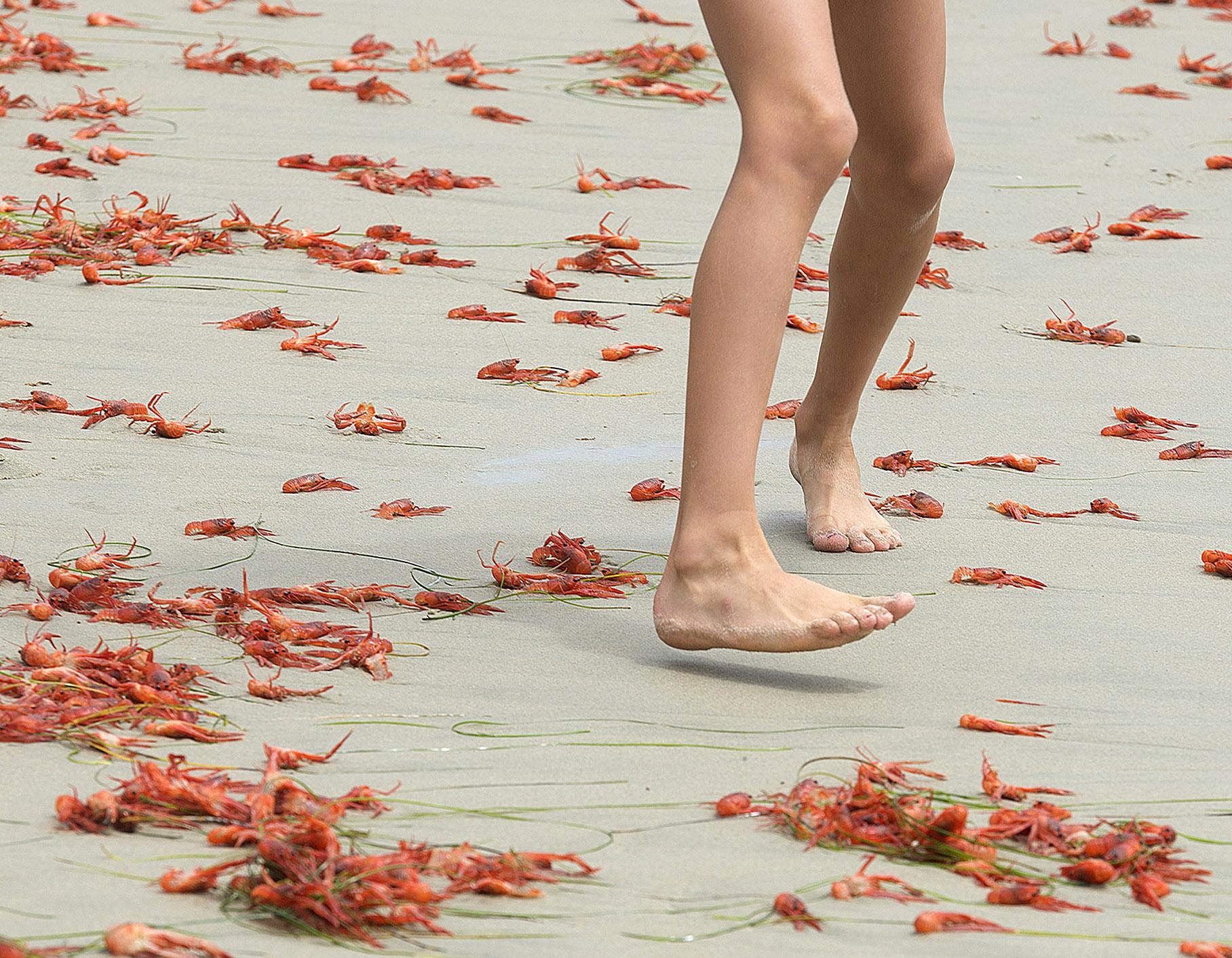 summer-beach_-mini_-crabs_-feet_-cy_