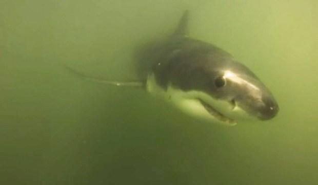 shark-grab_