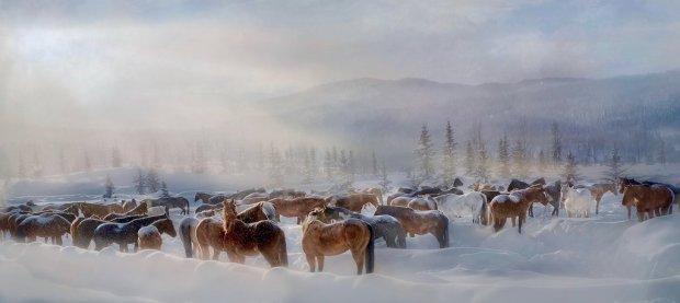 Herd of horses in snow