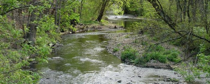 Red Clay Creek - Rick Darke 900x300