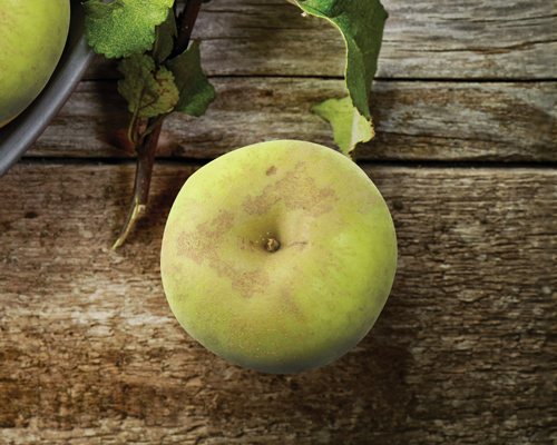 manzanas tipos