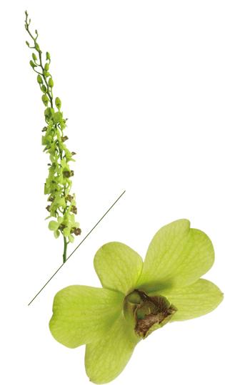Green Dendro
