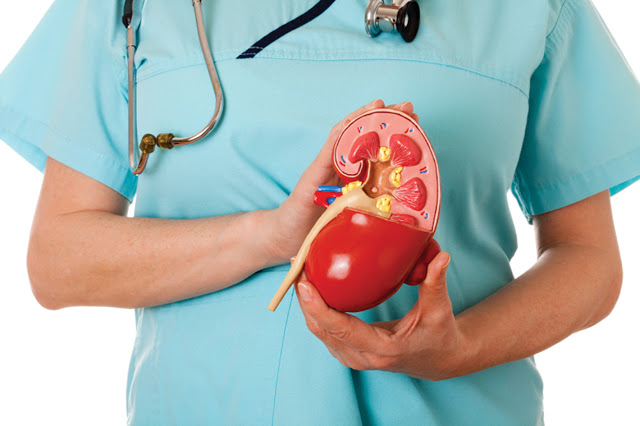 Check Out The Causes Of Kidney Problem, Symptoms And How To Prevent It Check Out The Causes Of Kidney Problem, Symptoms And How To Prevent It