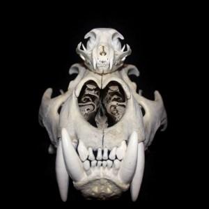 Animal Bones/Supplies