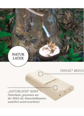 HEFEL Nackstützkissen Naturlatex wird zu 100% aus der Milch des Kautschukbaumes gewonnen. Das Nackenstützkissen ist für Allergiker geeignet und entspannt nachhaltig die Nacken-Muskulatur. TENCEL® Holzfaser im Jersey Überzug für atmungsaktiven gesunden guten Schlaf