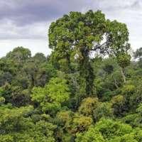 MRV Engenharia assina protocolo de adoção de parque localizado no Pará