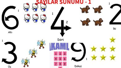 Photo of İlkokul 1.Sınıf Matematik Sayılar Sunumu – 1