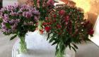 veronica plant met groene steel en kleine paarse bloemetjes