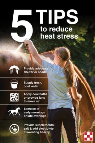 How to Keep Horses Cool in Hot Weather