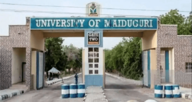 Buhari Govt Under Fire For Budgeting N2.2bn Per 1 Kilometer For UNIMAID Fence.
